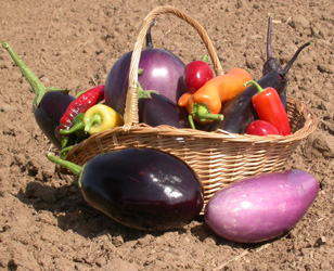 Eggplants and hot peppers