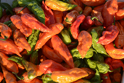 Ghost chilies